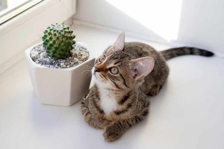 High angle view of cat by potted plant on table