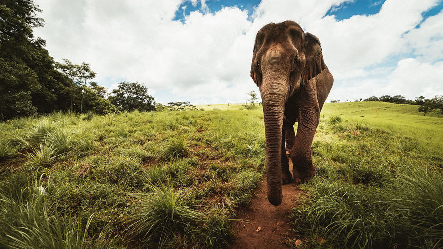 Mondulkiri, Cambodia Agriculture Alone Animal Themes Animals In The Wild Arid Climate Cambodia Day Elephant Elephant ♥ Elephants Escapism Farm Field Getting Away From It All Grass Grassy Landscape Mondulkiri Nature No People Outdoors Remote Rural Scene Standing Wild
