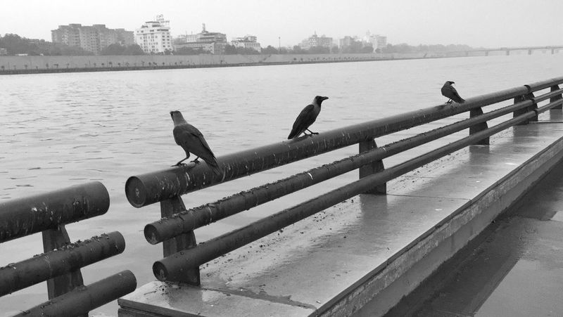 Day 262. Animal Themes Architecture Bird Built Structure Animals In The Wild Building Exterior Water Wildlife Railing Perching City Tranquility Zoology Avian Sky Nature Scenics Skyline Sea Day IPhone ShotOniPhone6 IPhoneography Iphoneonly Iphone6