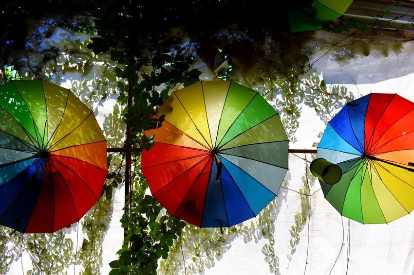 3rd time lucky under the rainbow Low Angle View Blue Orange Contrast Red Umbrellas Umbrella Rainbow Rainbow Colors Three Umbrellas Rainbow Umbrella Rainbow Umbrellas Green Grape Vine Grape Vines Plant Multi Colored Close-up Umbrella Rainy Season Colorful Rainfall Under Sunshade Shelter Fanned Out