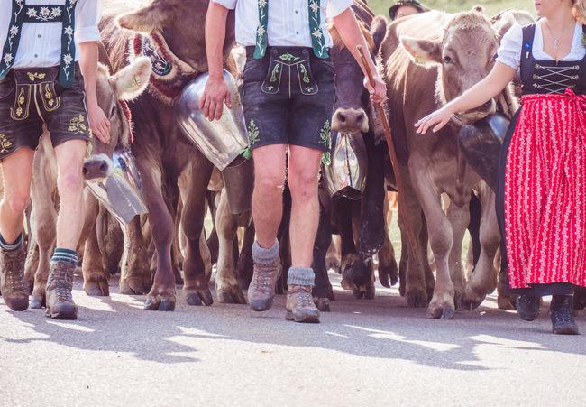 Alpenloge Viehscheid
