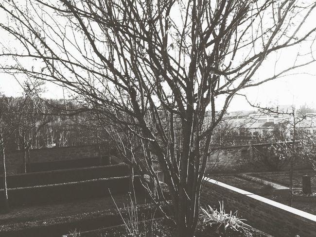 Baum ♥ Herbst Herbstanfang
