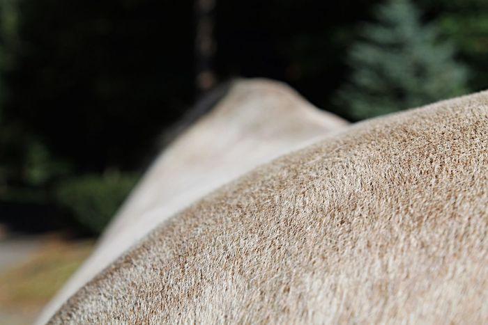 artsy First Eyeem Photo Artsy Fartsy Horse Taking Photos