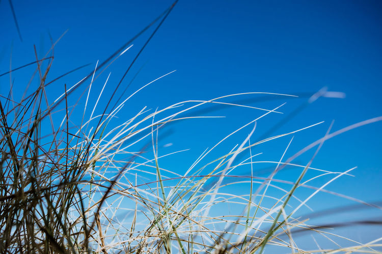 Close-up of grass against blue sky