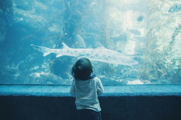 Rear View Of Boy In Aquarium