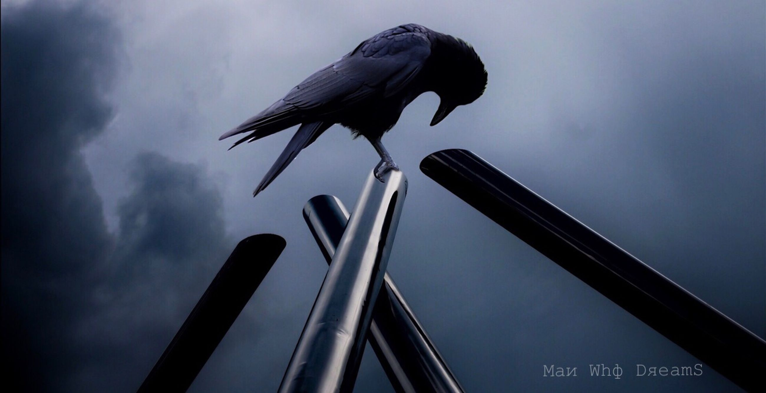 animal, bird, animal themes, animal wildlife, one animal, vertebrate, animals in the wild, sky, low angle view, no people, cloud - sky, perching, nature, day, outdoors, architecture, metal, crow, focus on foreground, raven - bird