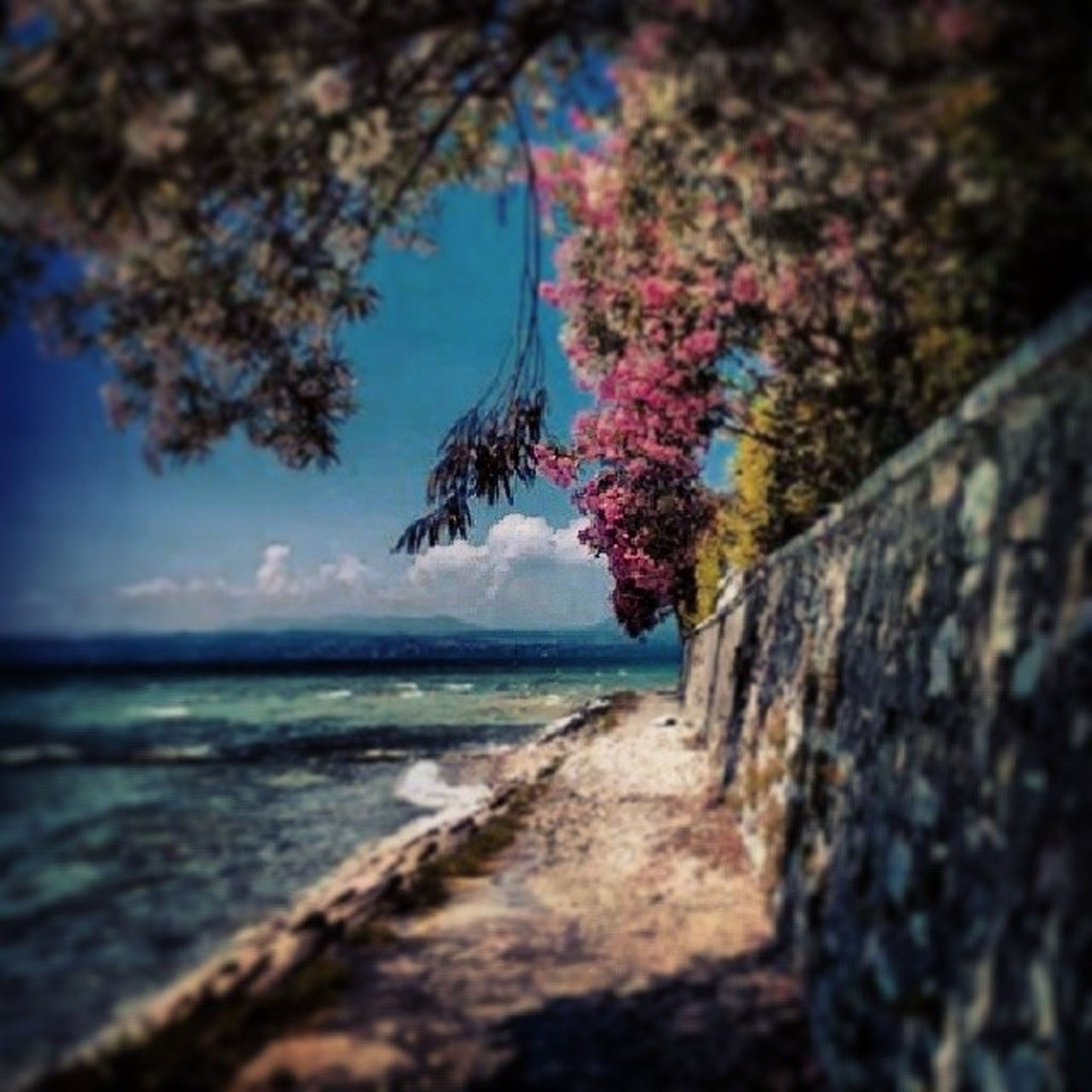 sea, water, tree, horizon over water, tranquility, beauty in nature, nature, tranquil scene, sky, scenics, beach, blue, branch, growth, outdoors, selective focus, day, no people, idyllic, shore