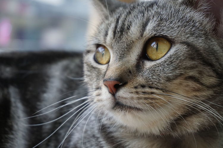 looking for someting Adorable Animal Themes Beautiful Cat Cat Lovers Cat♡ Close-up Day Domestic Animals Domestic Cat Eye Feline Focus On Foreground Lively Lovely Mammal Meow No People Nose One Animal Outdoors Paw Pets Whisker Yellow Eyes
