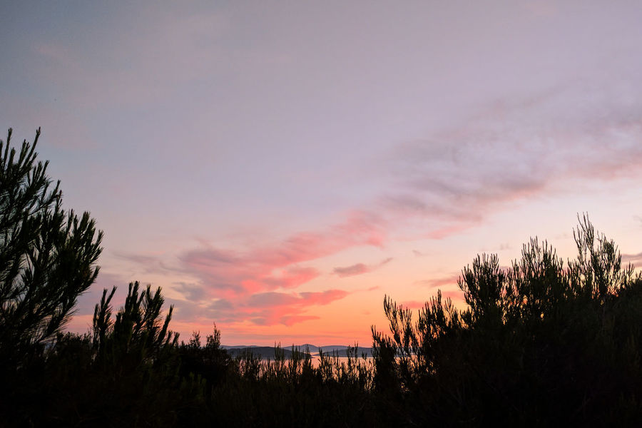 Beauty In Nature Calm Cloud - Sky Day Growth Landscape Nature No People Orange Color Outdoors Pink Purple Scenics Silhouette Sky Sunset Tranquil Scene Tranquility Tree