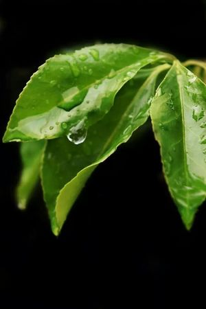 Rain Drops Plant Relaxing