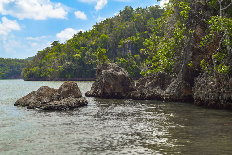 National Park los Haitises in Dominican Republic Dominica Isolated Jurassic Park Natural Nature Tree Bird Caribbean Haitises Island Lake Landscaüe Mangrove Ocean Outdoors Parade Paradise Park Park - Man Made Space Reserve Rocks Terrenas Travel Destinations Water Wildlife