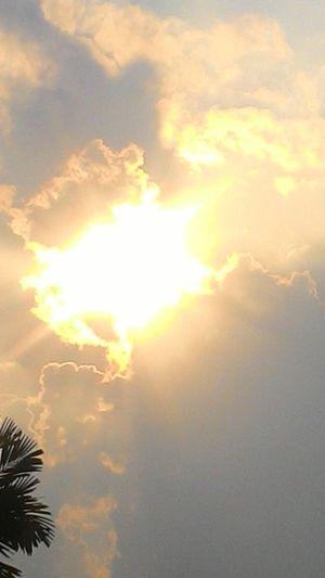 Tree Sunset Backgrounds Sun Sunlight Sunbeam Sky Cloud - Sky