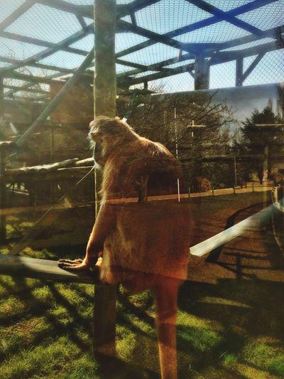 Animals Monkey Ape HDR