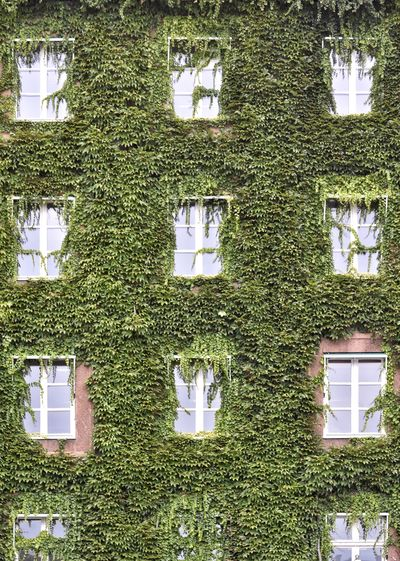 Low angle view of ivy growing on house wall