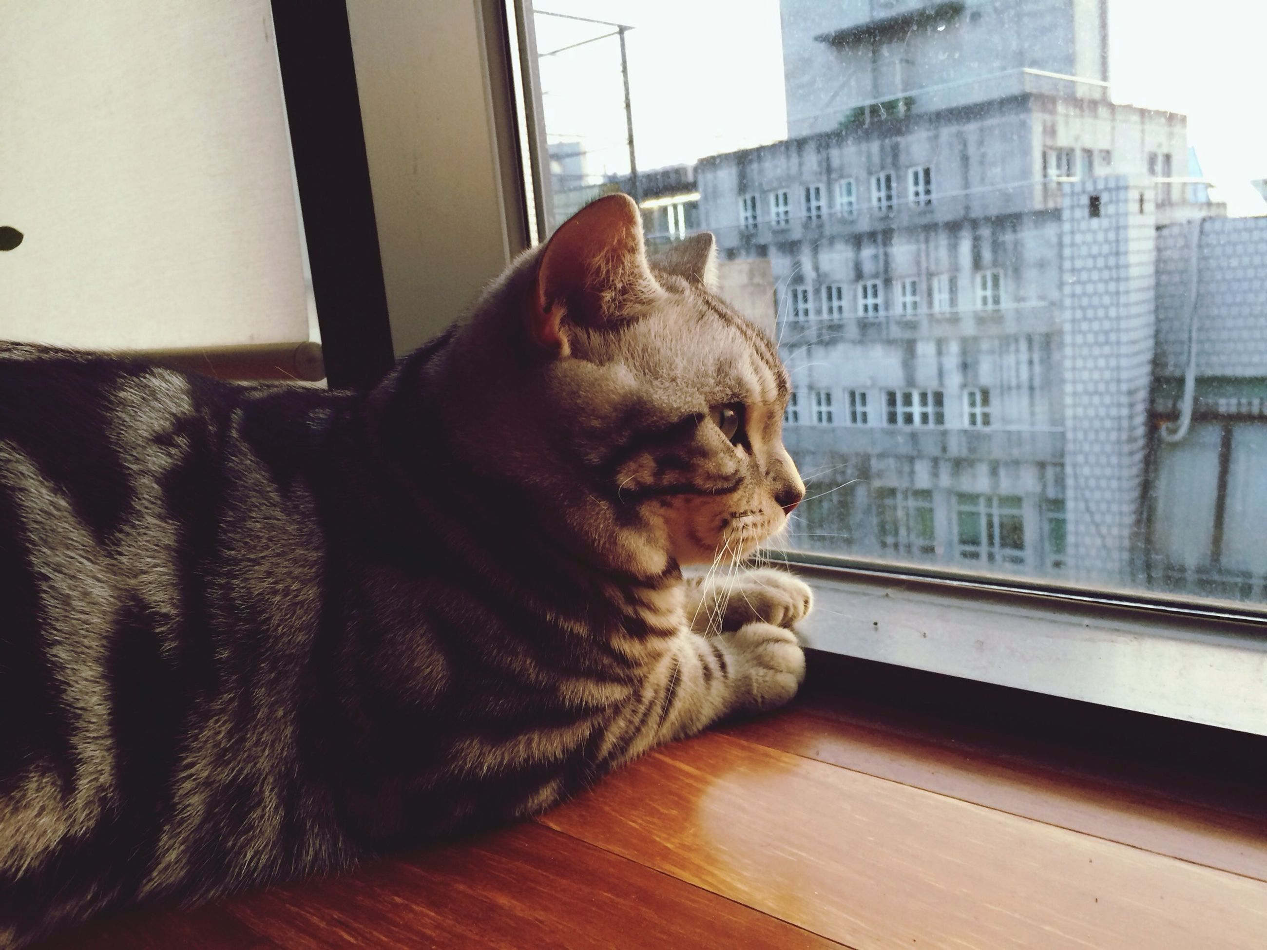 domestic animals, pets, one animal, animal themes, mammal, indoors, window, dog, animal head, domestic cat, relaxation, close-up, cat, looking through window, built structure, architecture, no people, resting, feline, building exterior
