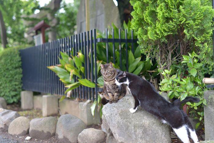 伸び〜るw Cat Cats Cat♡ Kitty Meow 猫ぽとれ Animals Cute Relaxing Taking Photos From My Point Of View Hello World Nature Photography EyeEm Nature Lover Snapshots Of Life Walking Around EyeEm Best Shots Nikon Snapshot Nikon_photography
