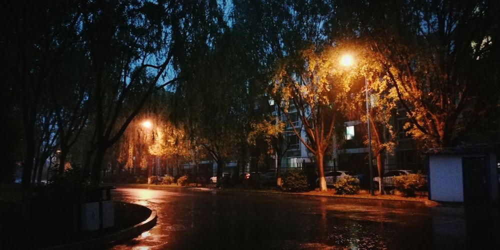 Tree City Water Illuminated Reflection Sky
