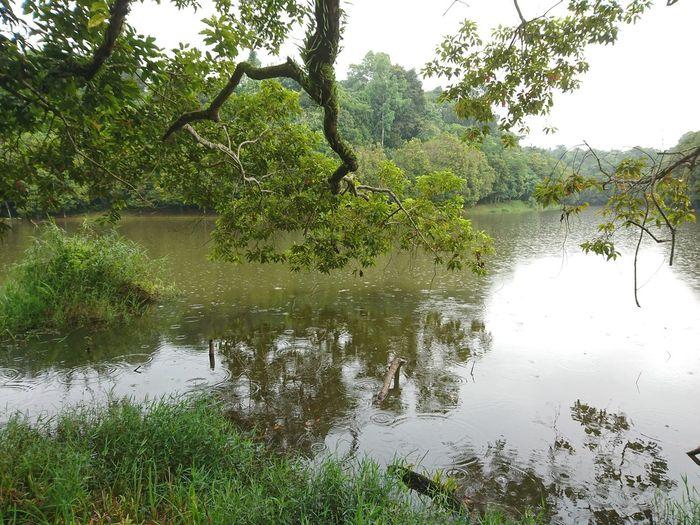 A Tree Rain