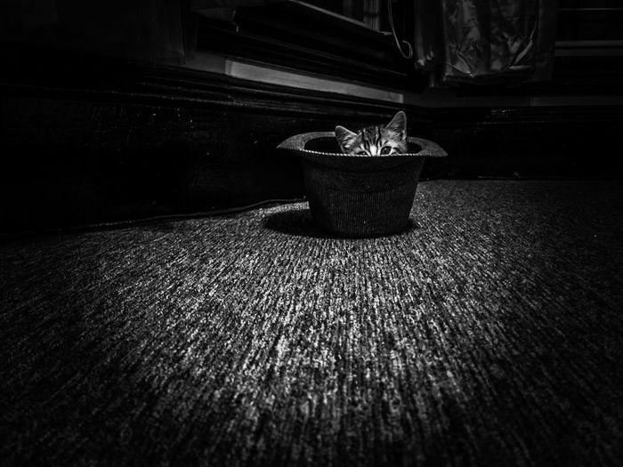 No People Shadow Indoors  Close-up Kitten Eyem Gallery Eyeemphoto EyeEm Kitty Feline, Tomcat, Tom, Kitten, Mouser; Alley Cat; Kitty, Furball; CatInTheHat Cat Photography Mammal Domestic Animals Domestic Cat