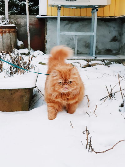 Portrait of a cat on snow covered field