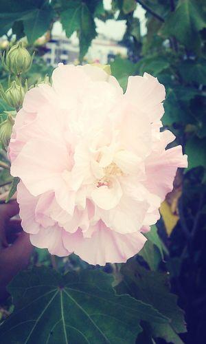 有些事就是淡然處之,花兒不是天天美麗。