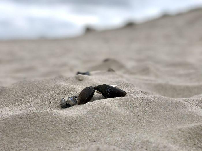 Muscheln Beach