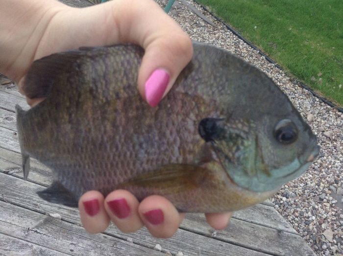 BLUE GILL Went Fishing Catching Them Big Fish Outdoors❤