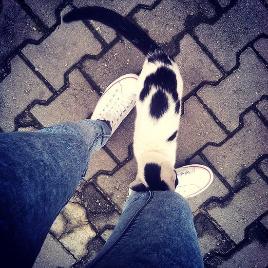 Yo Dzis Kotek Na przystanku słodziak cat sweet animal haha melo w busie krzak moc energia instagood <3 <3
