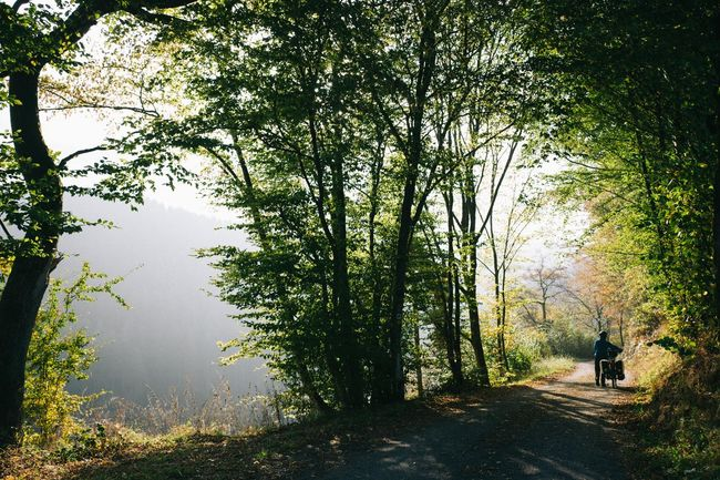 Cycling Luxembourg Morning Morning Light Nature Road Tree