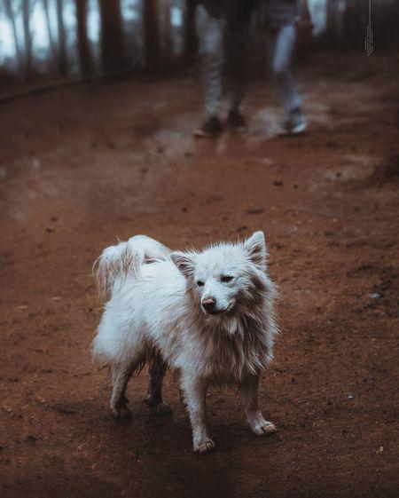 Full length of dog standing on land