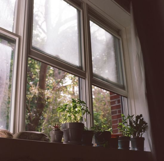 Afternoon Brick Close-up Curtain Curtains Day Growth Herbs Home Interior Hudsonvalley Indoor Plants Indoors  Nature No People Plant Plants Shadow Soft Light Succulents Sunlight Tree Window Window Sill Windowsill