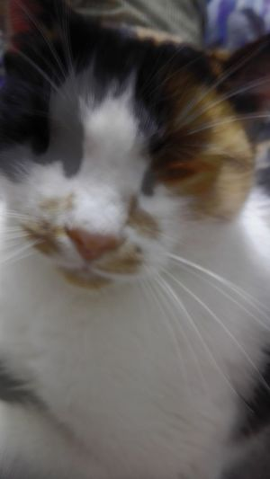 Glitch Domestic Cat No People Close-up Motion Motion Glitch Calico Cat Cat Whisker One Animal Veronica IONITA Photography WOLFZUACHiV Photography Huawei Photography On Market Wolfzuachiv WOLFZUACHiV Photos Veronica Ionita Ionita Veronica Eyeem Market Huaweiphotography No Person Defocused Unfocused