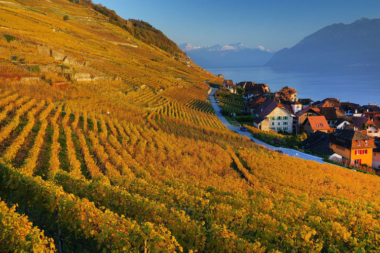 Residential buildings by vineyard against sky