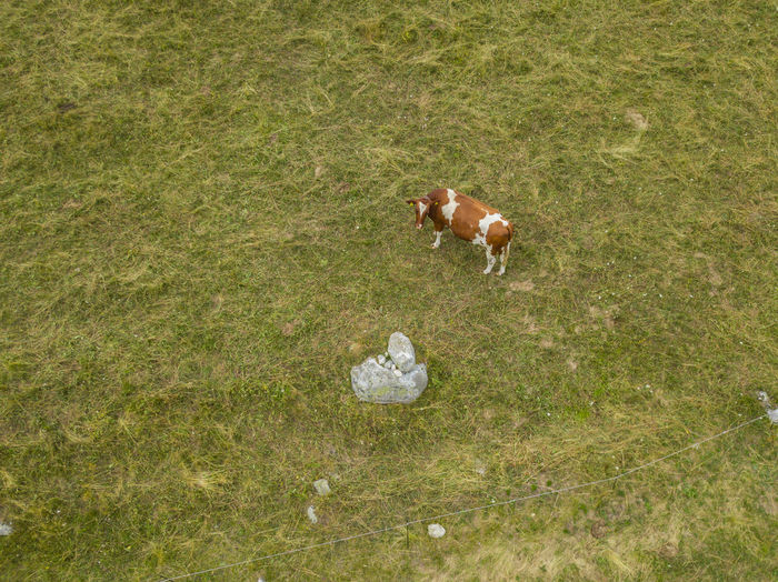 High angle view of small dog on field