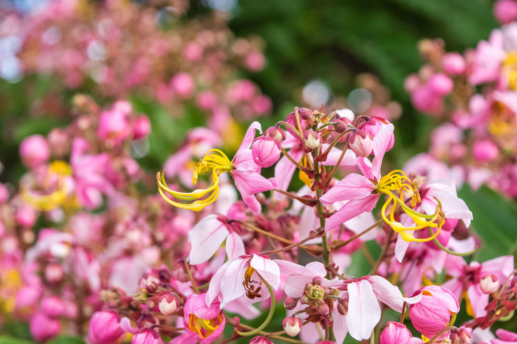 Pink flower of
