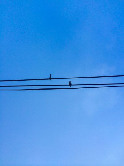 Low angle view of birds perching on power line against clear blue sky