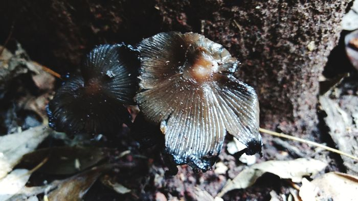 Fungi Hongos  Musroom Nature Beauty In Nature Outdoors Close-up No People Close Up Nature Photography Nature_collection Day Freshness Full Frame