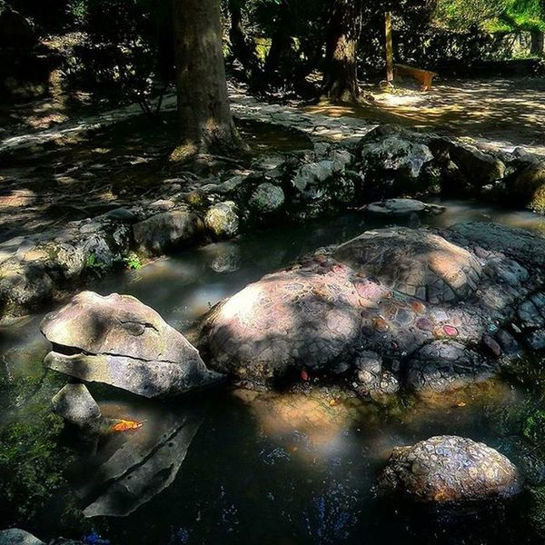 New Athos, Abkhazia Abkhazia Newathos абхазия новыйафон парк Park Mountains Gourge горы Ущелье Tortoise Turtle черепаха Кавказ Caucasus Everydayeverywhere Shadow