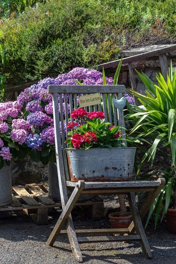 Flowering Plant Flower Plant Nature Growth Freshness Day Purple No People Front Or Back Yard Garden Beauty In Nature Outdoors Fragility Wood - Material Vulnerability  Variation Seat Plant Part Leaf Gardening Gartenstuhl Blumenzierde