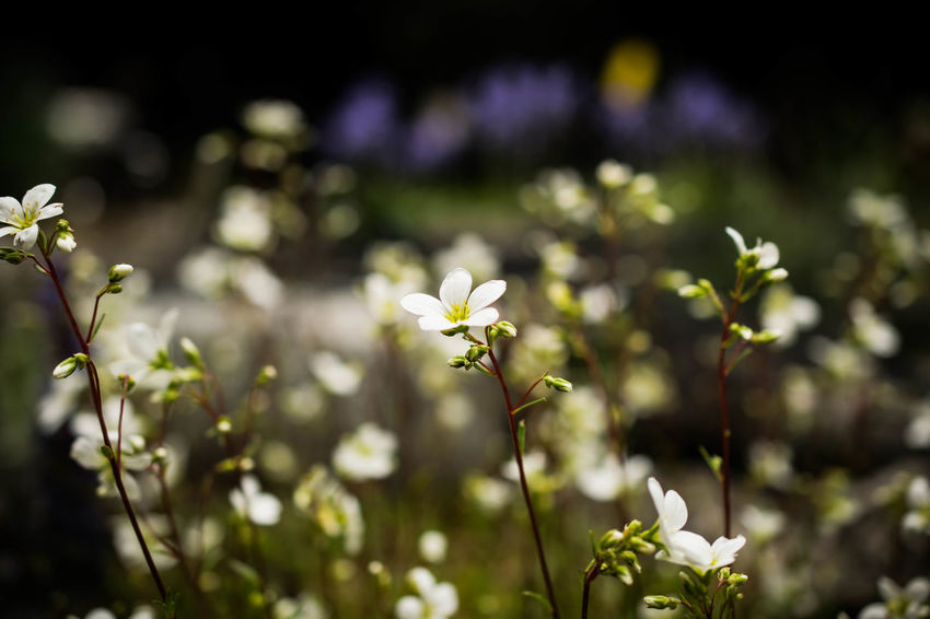 Beauty In Nature Blooming Day Delicate Flora Flower Fragility Freshness Growth Nature No People Outdoors Plant Spring Summer