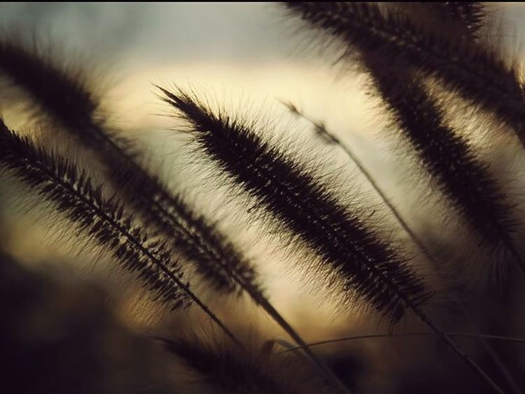 Sunset Close-up No People Nature Sky Outdoors EyeEmNewHere Plant Ending The Day Day The Great Outdoors - 2017 EyeEm Awards