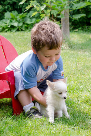 a young boy reaches down to pick up his new puppy Children Kids Red Chair Touch Bonding Boy Casual Clothing Child Childhood Childhood Memories Dog Domestic Domestic Animals Kid Landscape Leisure Activity Male Mammal One Animal One Person Outdoors Pet Pet Owner Pets Real People