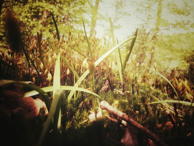 Sous bois Forest Floor Nature_collection Nature Serenity Nature_collection
