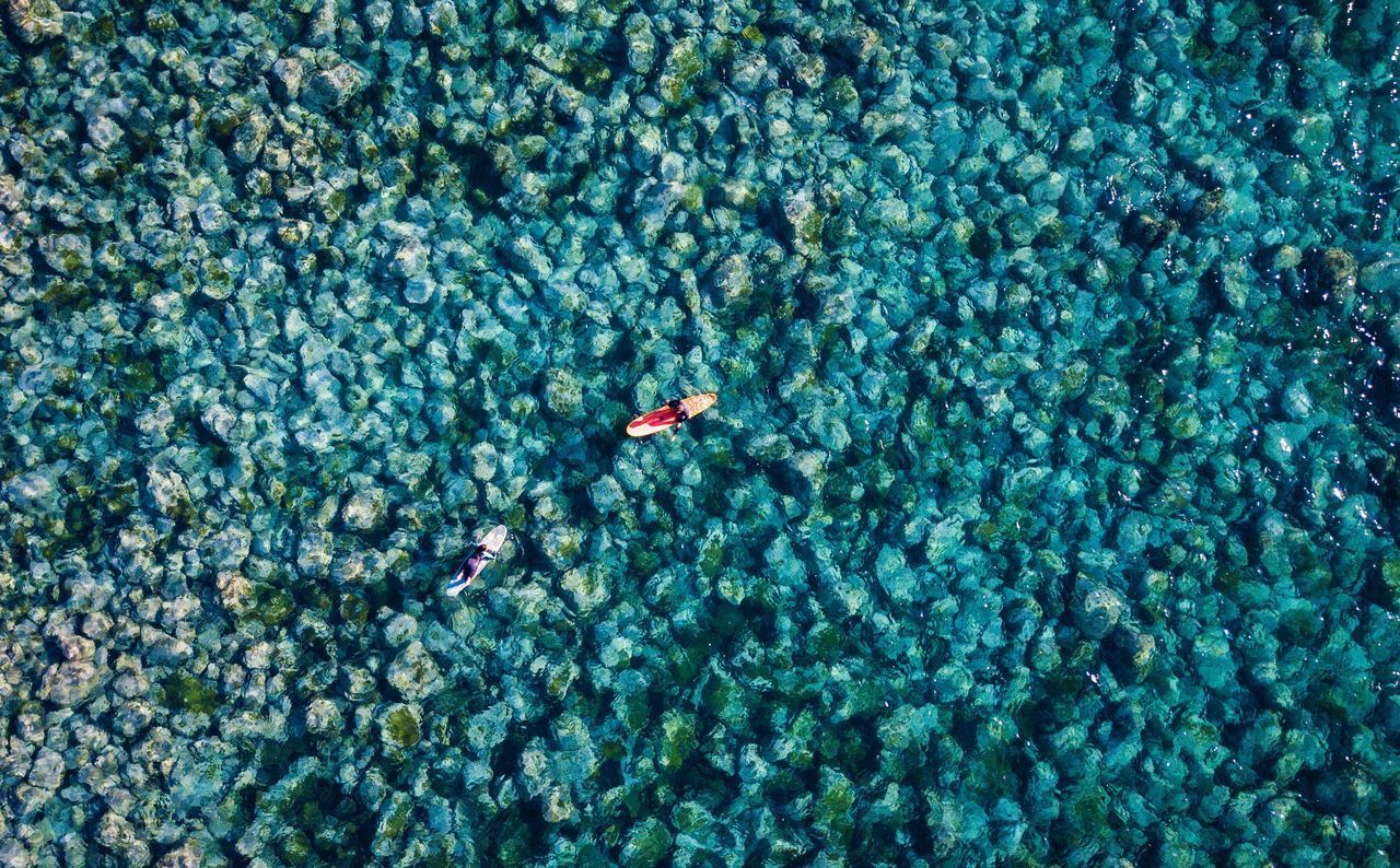 swimming, water, sea, underwater, animal, animal wildlife, high angle view, nature, animals in the wild, day, animal themes, no people, undersea, fish, vertebrate, full frame, backgrounds, waterfront, blue, floating on water, outdoors, turquoise colored, marine