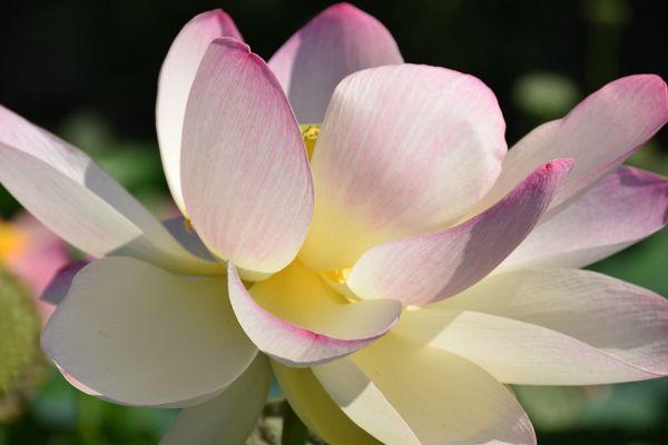 Flower Flowering Plant Petal Beauty In Nature Fragility Vulnerability  Freshness