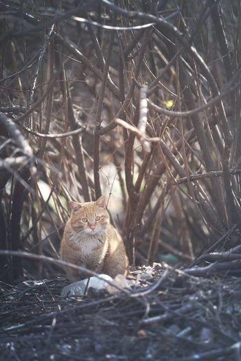 Cat Streetcat Feralcat 길고양이 만두입니다