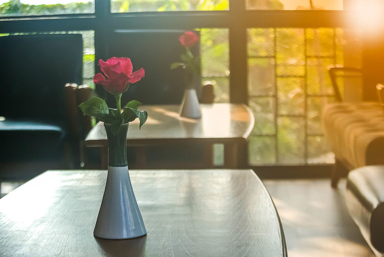 Beauty In Nature Close-up Day Flower Flower Head Growth Home Interior Indoors  Nature No People Sunlight Table Vase Window