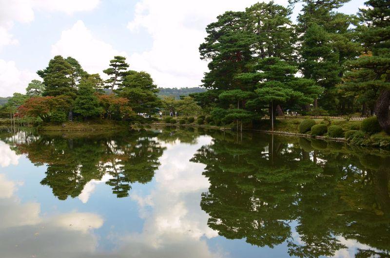Trees reflect
