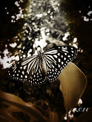 Butterfly in Chaingdao. 💐 Greenery Butterfly Butterfly Collection EyeEm Gallery Nature_collection Eyeem Nice Shots