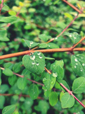 Tree Leaf Close-up Plant Green Color